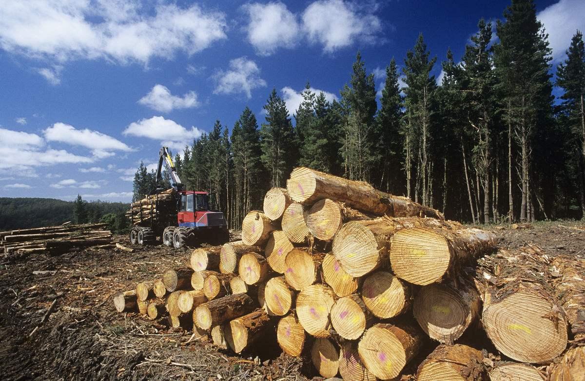 俄罗斯为打击非法�K采伐,或将暂停对华▲木材出口