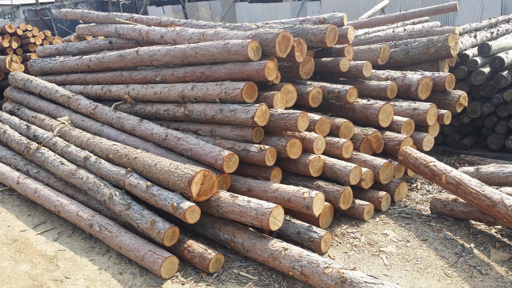 俄羅斯或限制對華木材出口 西伯利亞冷杉精華不受影響